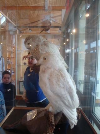 Owlday8