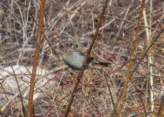 Sparrow2