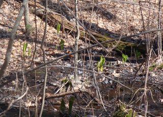 Springwoods12
