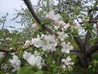 Orchard7