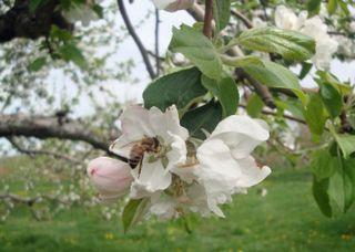 Orchard10