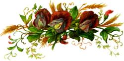 Sweet-pea-blooms