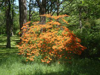 Arboretum10