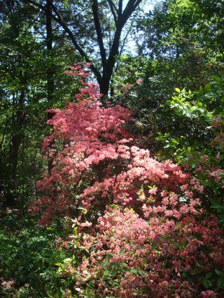Arboretum13