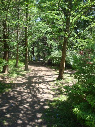 Arboretum17