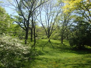 Arboretum19