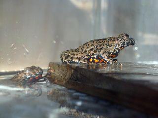 Toads9