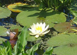 Pond22