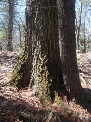 Springwoods5