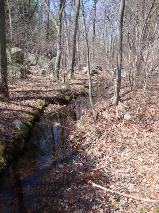 Springwoods6
