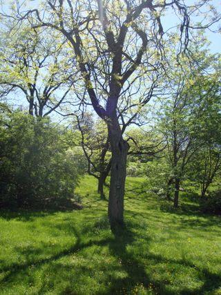 Arboretum22