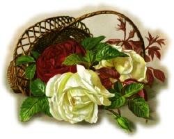 Basket-redwhite-roses