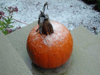 Snowpumpkin1