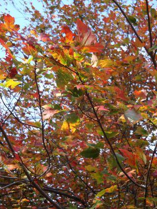Octoberpics4