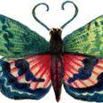 Fancy-pattern-butterfly