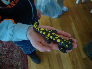 Amphibians3