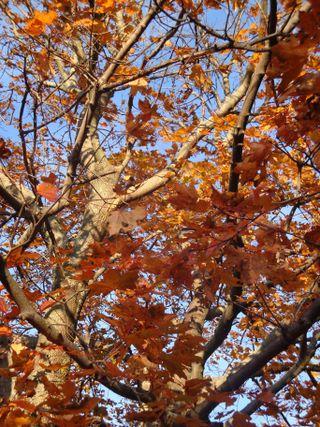 Octoberpics8
