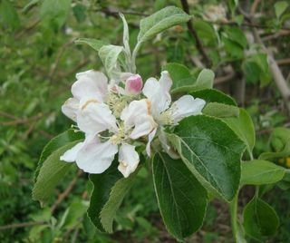 Springorchard2