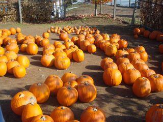 Octoberpics9