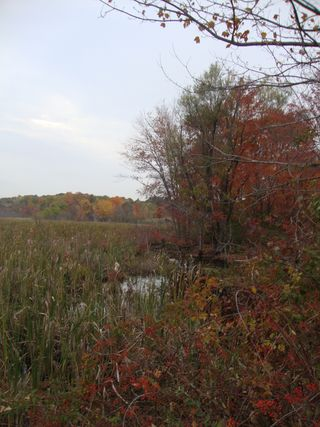 Autumnmarsh3