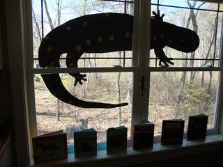 Amphibians6