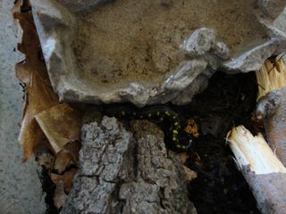 Amphibians7