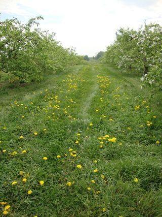 Springorchard