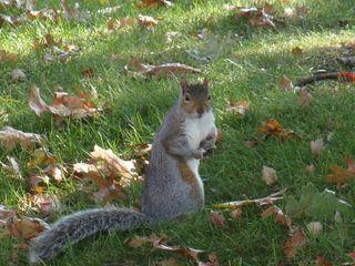 Squirrelinleaves