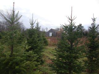 Treefarm6