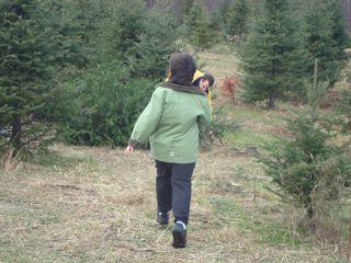 Treefarm14