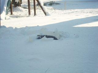 Snowsunday2