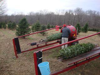 Treefarm15