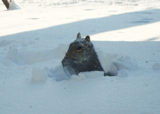 Snowsunday3