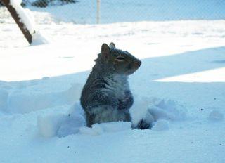 Snowsunday9