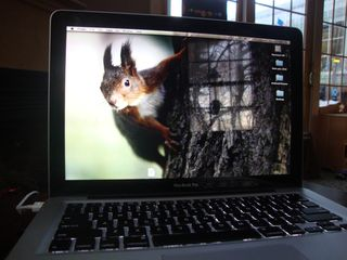 Squirrelscreensaver