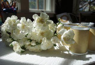 Rosesunday1