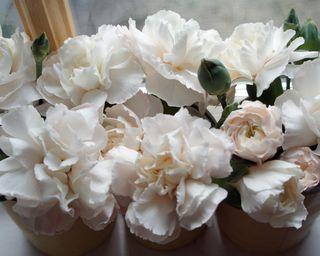 Rosesunday12