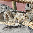 Skinny Squirrel