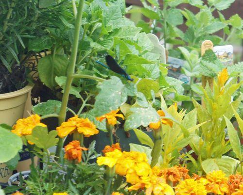 Damselflyonplants