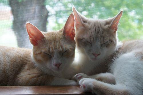Catsinwindow2