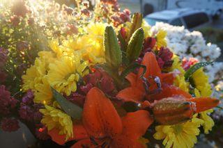 Snowonflowers4