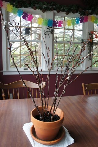 Treepot6