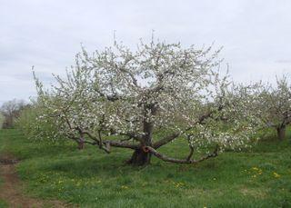 Orchard11