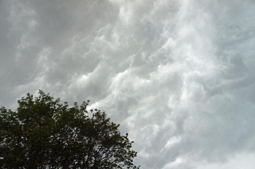 Stormovertree1