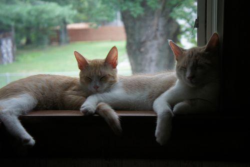 Catsinwindow6