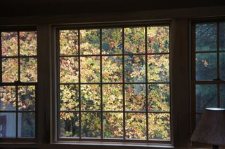 Yellowtreebackwindow