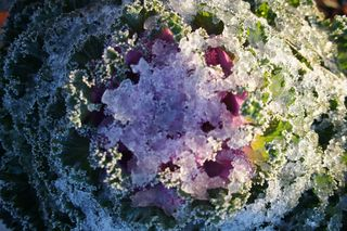 Snowonflowers2