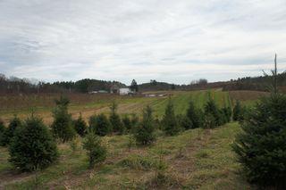 Treefarm2