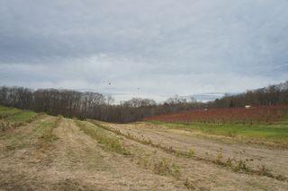 Treefarm3