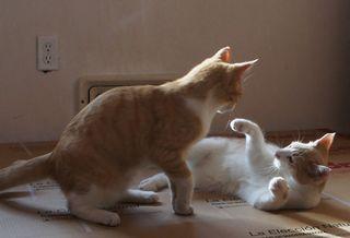 Catfight6
